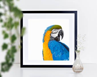 Blue and Gold Macaw - limited edition signed print, framed or mounted