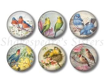 Beautiful Birds - Set of Six 1.5 Inch Magnets - Lovely Bird Kitchen Decor - Refrigerator Magnets