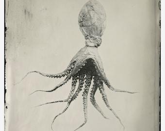 Giclée Print: Octopus