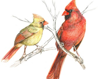 Pair of Cardinals, Original Colored Pencil drawing, bird gift for him, bird gift for her, Ornithological illustration, nature illustration