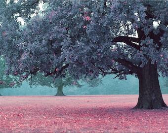 Print : Autumn Tree Landscape