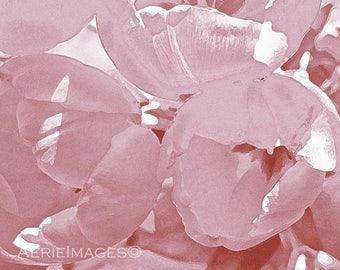 Blush Pink Tulips, 5x7 or 8x10 Flower Photo Spring Girls Feminine Decor