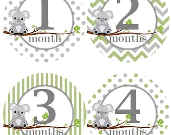 Baby Monthly Milestone Growth Stickers Sage Green Grey Koalas Baby Nursery Theme MS562 Baby Shower Gift Baby Photo Prop