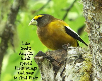 EVENING GROSBEAK - Classic Folded Notecard with Envelope - Wildlife Photograph with Inspirational Message, Blank Inside