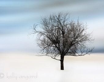 tree photography, dreamy landscape photograph - winter snow 8x10 woodland fine art photo - home decor