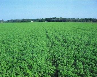 Bulldog 805 Inoculated Alfalfa Seed