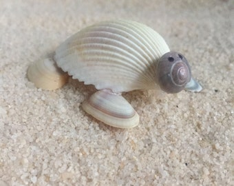 Sea shell Sea Turtle Animal Beach Décor Handmade Seashell
