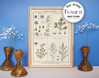 "Vintage illustration of Herbs - framed fine art print, botanical art, home decor 8""x10"" ; 11""x14"", FREE SHIPPING - 41"