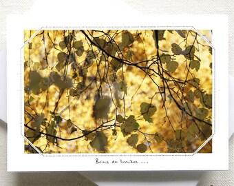 464...  Autumn sun.
