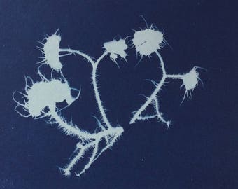 Miniature Lichen Cyanotype Print