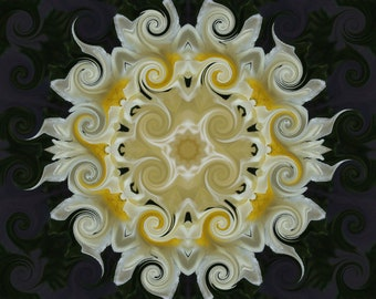 Abstract art White and yellow daisy digitally altered photograph print choose size