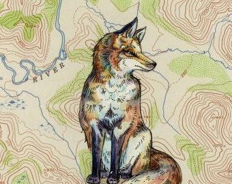 Fox art on topography map, Archival print, wildlife illustration, animal print, wall art Fox illustration, fox painting