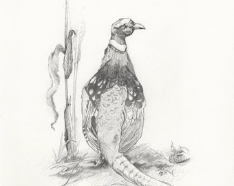 Pheasant - 8x10in. Original Graphite Drawing
