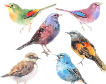 Birds Clipart Set - clip art set of birds, watercolor bird clipart, commercial use, instant download