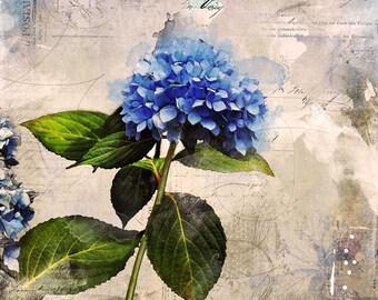 """Blue Hydrangea fine art notecard size 5"""" x 5"""""""