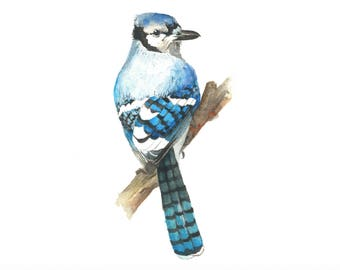 Blue Jay Bird Watercolour Print