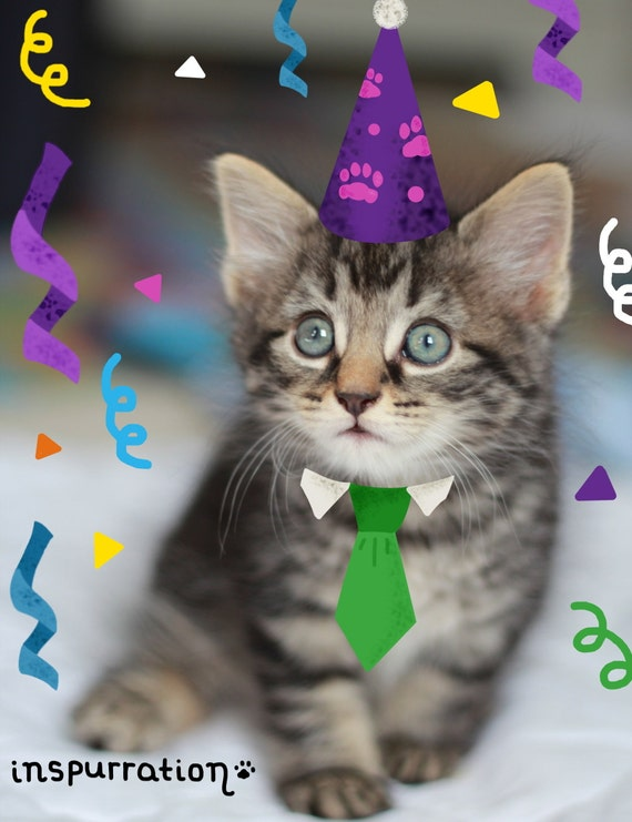 Dog and cat cards happy birthday cards pack of four like this item bookmarktalkfo Images