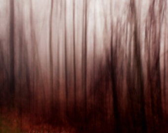 CLEARANCE Dark, Woodland Photo, Gothic, Fairytale, Abstract, Nature, Landscape, Red, Black, Grey, 5x5 Fine Art Print - A Dark Wind