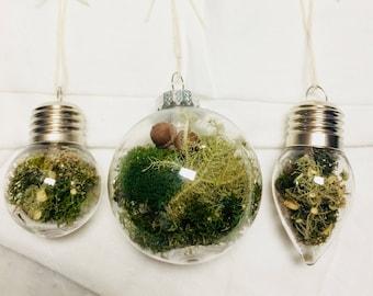 Hanging Terrarium, Moss & Lichen Living Ornament, Set of 3