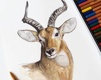 Antilope-ORIGINAL watercolor painting, unique, handmade Antilope sheet