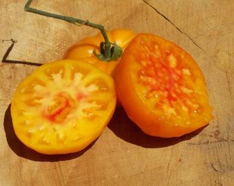 Hillbilly Potato Leaf Tomato Seeds, Hillbilly heirloom tomatoes, organic tomatoes, organic heirloom seeds