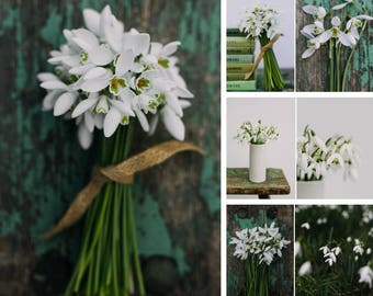 Snowdrop cards - Set of 4 notecards * Notecard, Greeting card set, Thank you, Happy Birthday, Thinking of you, Cards for Gardeners