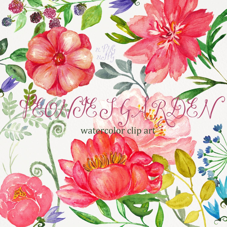 Peonies garden Watercolor flower clipart hand drawn. Tender