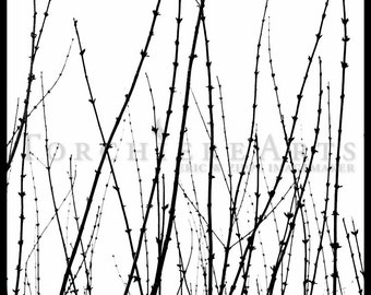 Bare Branches In Winter, Black And White Art, Winter Silhouette Art, Winter Photography, Forsythia Wall Art, Nature Photography Print