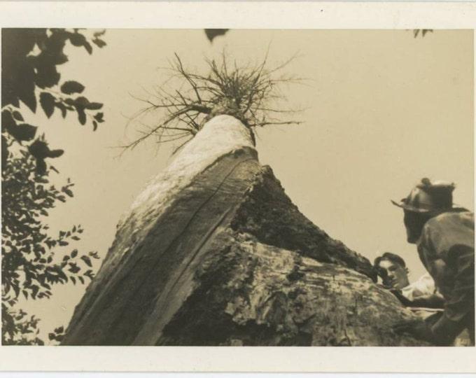 Vintage Snapshot Photo: Tree, 1938 (612526)