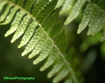 Fern Leaf | Nature Photography