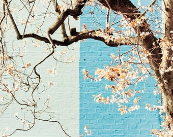 """London photography, Notting Hill houses, large photography, travel photography - """"Notting Hill Ikebana"""""""