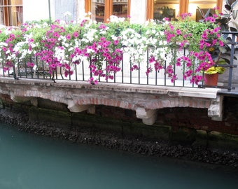 Flowers on canal