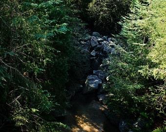 Babbling Brook, Nature Photography, Wildlife, Florida Nature, Brooks, Forest Photography