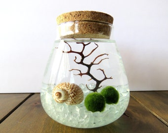 Marimo Terrarium Kit Japanese Marimo Moss Ball Terrarium Teardrop Glass Cork Vase Home Decor Beach Decor