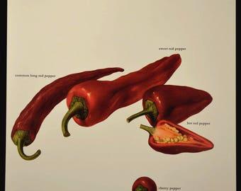 Hot Pepper Print Kitchen Wall Decor Art Vegetable Peppers