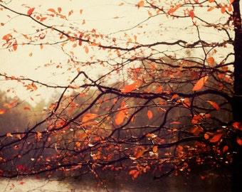 Nature Photography, Orange, Brown,  Autumn Home, Rustic Fall, Woodland, Fall Photo, Nature, Tree Photo, Leaves, Leaf Photo, Nature Print