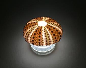 LED mini lamp / pink sea urchin