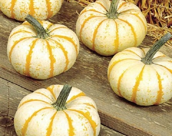 25 Pumpkin Seeds lil Pump ke Mon Pumpkin seeds