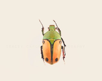 Beetle Photograph, orange, green, nature wall art print, rustic, minimalist, boys room decor, playroom art, garden decor, color photograph