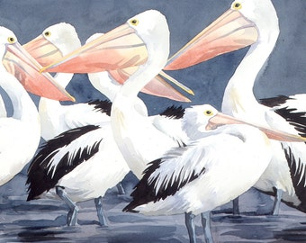 Australian Pelicans watercolour - wildlife art - nature, limited edition print