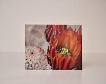 Cactus Bloom : Decorative Photography Tile 8x10