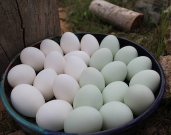 Single Hole Blown Duck Eggs - White, Mint Green, Grey