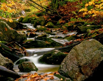 Vermont Fall Autumn Photography Print New England Stream Leaves Landscape Fine Art Wall Art Decor | Also Available on Canvas or Metal