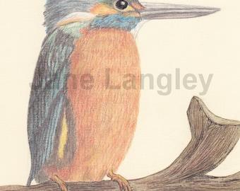 Kingfisher : A4 print of my original artwork