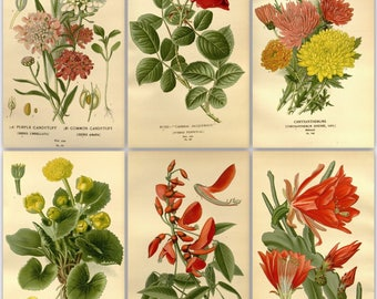 315 flower colour plates from the antique book (1896)