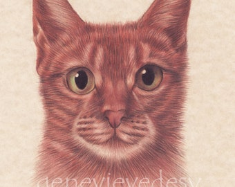 Original drawing of a cat - Cat drawing made colored pencils