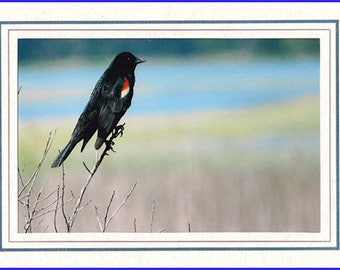 Red-Winged Blackbird Framed Photo Greeting/Note Card