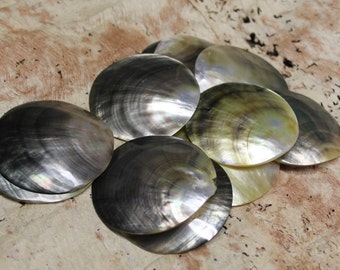 2 1/2 to 3 inch diameter blacklip mother of pearl round shell-ONE SHELL, mop, tahitian costume