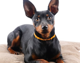 Natural Baltic Amber Collar for Pets | Dogs | Cats | Protect From Ticks and Fleas | Choose Size | Natural Leather Strap | Pets Beauty