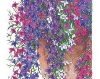 50+ Lobelia Regatta Trailing Mix / Perennial Flower Seeds